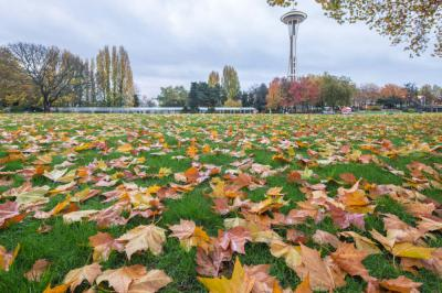 Five Fall Must-See Places in Seattle this Fall